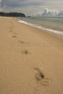 photo of Footsteps Sandy Beach Vacation