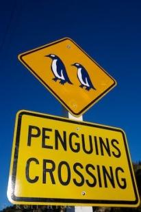 photo of Penguin Sign Oamaru