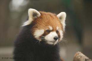 photo of Cute Animal Pictures
