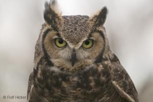 photo of Owl Photo