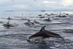 photo of Large Pack Pictures Of Dolphins