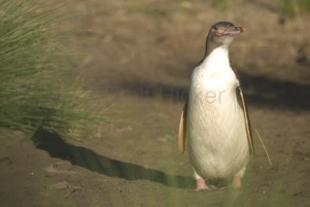 photo of Pictures Of Penguins
