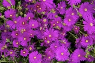 photo of Potted Flower Picture