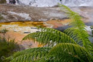 photo of Rainbow And Cascade Terrace Ferns Orakei Korako New Zealand