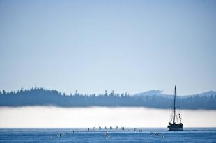 photo of Sailboat Fog Vancouver Island