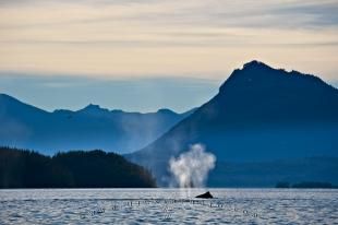 photo of Vancouver Island Scenery Humpback Whale