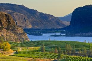 photo of Scenic Vineyard Lake Picture