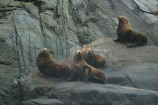 photo of Sea Lion Pictures