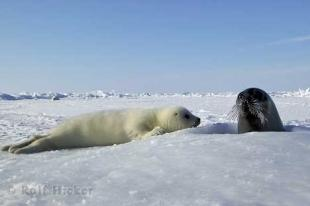 photo of Seals Animal