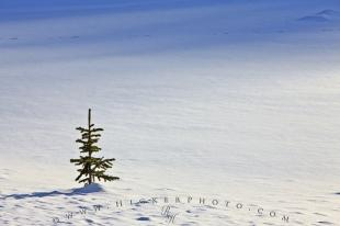 photo of Photo Single Tree Snowfield Banff National Park