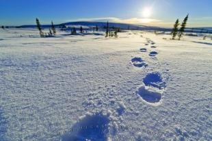 photo of Snow Footprints