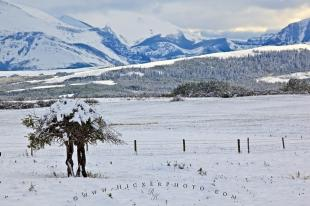 photo of Snowy Landscape Rocky Mountains Canada
