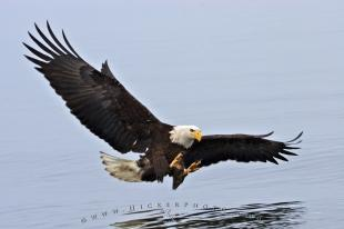 photo of Spread Eagle Open Wings Fishing
