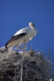 photo of Stork Bird Nest Camargue