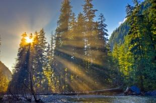 photo of Sunbeams Rainforest Trees Picture