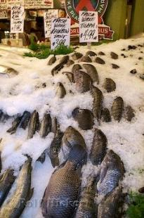 photo of Tilapia Fish