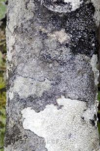 photo of Picture of Tree Bark