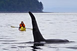 photo of Vancouver Island Kayaking