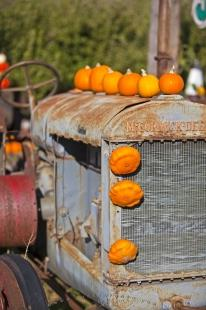 photo of Funny Vintage Tractor Pumpkin Picture