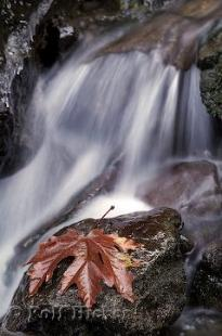photo of Waterfall And Fall Leaf Picture