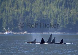 photo of Whale Watching Port Hardy