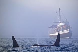 photo of Killer Whale Watching Gikumi Tour Boat