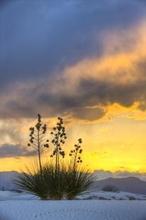 photo of White Sands Sunset