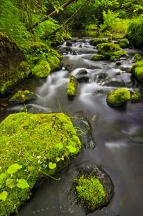 photo of Wilderness Creek Northern Vancouver Island