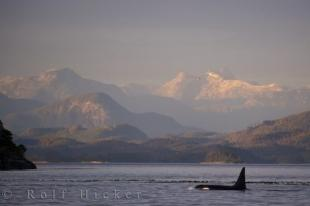 photo of Wildlife Scenery Northern Vancouver Island BC Canada