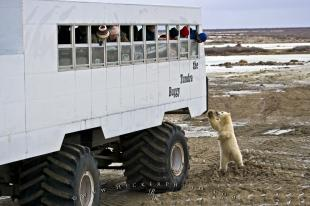 photo of Wildlife Tourism Churchill Manitoba