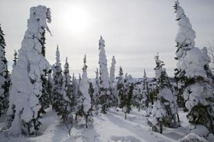 photo of Winter Trees