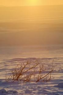 photo of Snow Covered Willows Winter Sunset