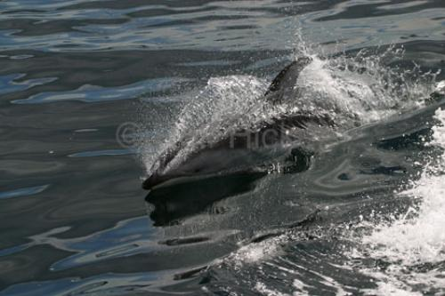 Photo: 