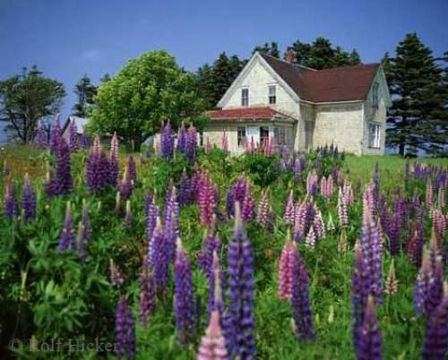 prince edward island travel