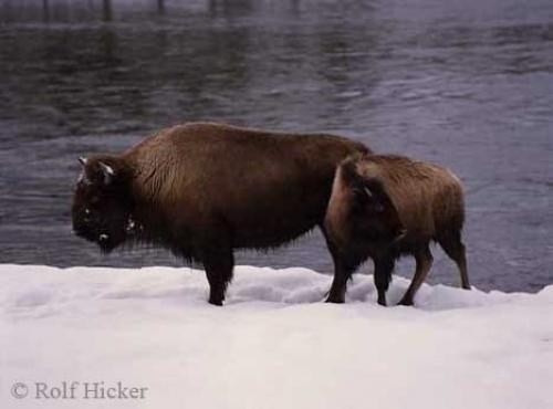 Photo:  Bison Pictures