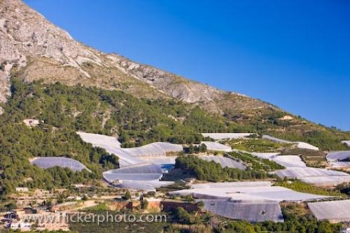 Photo:  Bolulla Agriculture Picture Province Of Alicante Spain