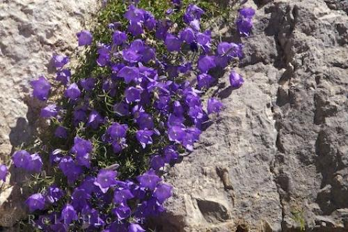 Picture of Cascade Flowers Rock Wall Gourdon France