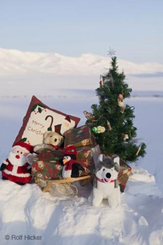 Photo:  Christmas Tree Pictures