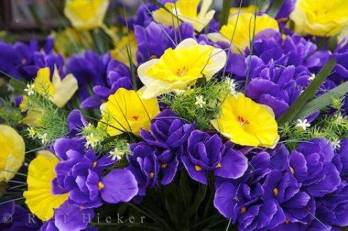 Purple Yellow Colorful Flower Bouquets