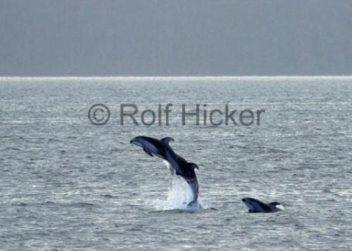Photo:  dolphins of canada
