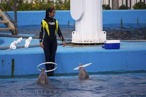 Photo:  Picture Of A Dolphin Trick
