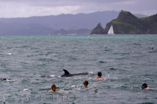 Photo:  Dolphins Swimming New Zealand