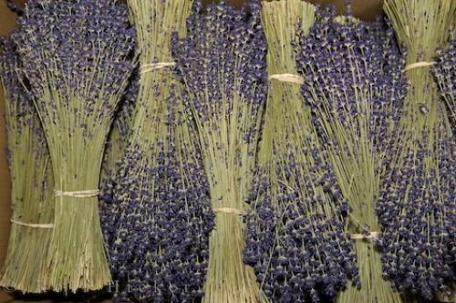 Bundles Dried Lavender