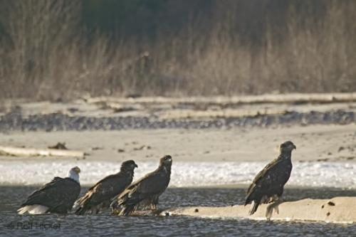 Photo:  young eagles