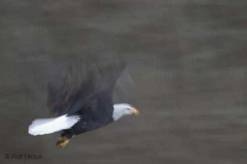 Photo:  Big Pictures of Bald Eagles