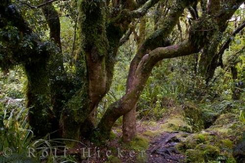Egmont National Park Rainforest New Zealand