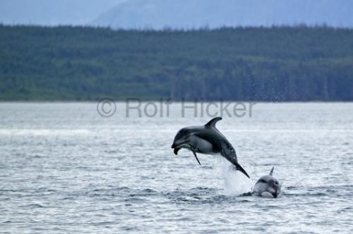 Photo:  dolphins inside passage