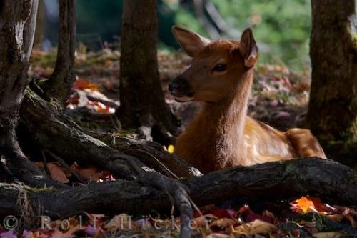 Photo:  Fawn Picture