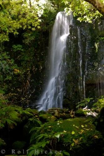 Photo:  Forested Waterfall Southern Scenic Route New Zealand