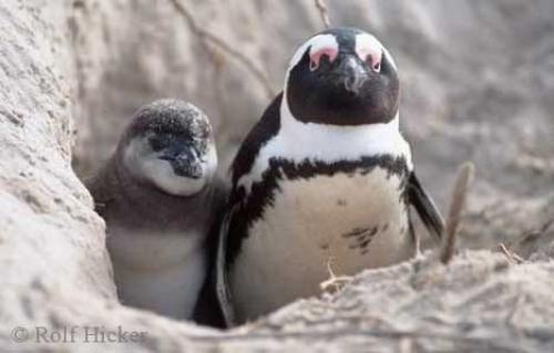Photo:  Funny Penguin Pictures